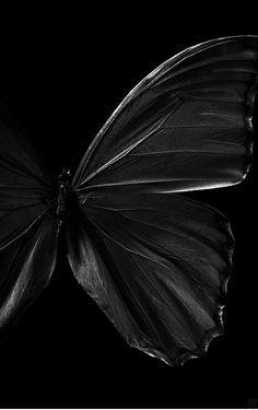 Black's beauty