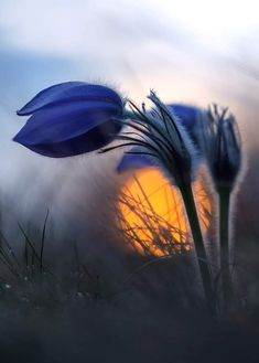 Find images and videos about blue, nature and wallpaper on We Heart It - the app to get lost in what you love. Amazing Flowers, Purple Flowers, Wild Flowers, Beautiful Flowers, Flowers Nature, Deco Nature, Flower Pictures, Flower Wallpaper, Belle Photo