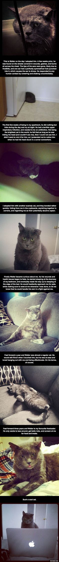 "Hahaha! Love this little story...we all have had a ""Walter"" in our lives..."