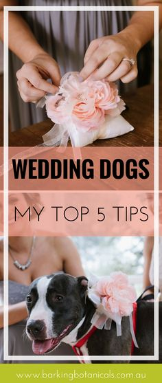 Dogs at weddings make everything instantly more amazing. We had our dog act as doggie ring bearer at our wedding and in this blog I share my top tips for having a dog friendly wedding.