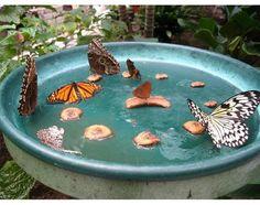 creepycrawlieslove:    Homemade Butterfly Feeder Tutorial
