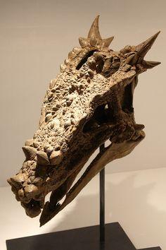 Google Image Result for http://upload.wikimedia.org/wikipedia/commons/f/fa/Dracorex_skull.jpg