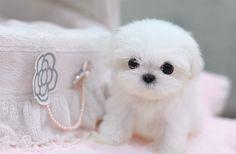 puffy little ball of cuteness