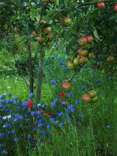wild flowers in the orchard
