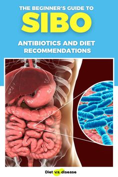 A healthy and diverse gut bacteria is important for health. However, an overgrowth of this bacteria in the small intestine – known as SIBO – can cause serious problems. This article takes a detailed look at SIBO and what dietary changes are scientifically shown to help. #dietitian #nutritionist #nutrition #health #diet Nutrition Education, Nutrition Tips, Healthy Nutrition, Health Routine, Thyroid Diet, Gut Bacteria, Food Intolerance, Natural Health Remedies