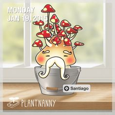 Say hello to my plant! It has absorbed 880 oz of water. Get yourself a plant at http://fourdesire.com/outer_link?url=http://itunes.apple.com/app/id590216134&l=en_US&m=54BD5E4D