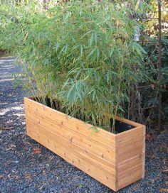 Jardinière en palettes rectangulaire en bois hêtre à l'extérieur et en noir à l'intérieur. Grandes plantes vertes dedans et échelle rouillée à droite.