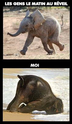 Les gens le matin au réveil - Top Tutorial and Ideas Funny Video Memes, Funny Jokes, Hilarious, Animals And Pets, Funny Animals, Cute Animals, Funny Test, Funny French, Image Fun