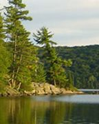 Trees on the Canadian Shield. Small Catfish, Aquatic Insects, Habitat Destruction, Water Quality, Environmental Science, Natural Resources, Freshwater Fish, Endangered Species, Native Plants