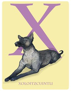 X is for Xoloitzcuintli: Under Appreciated Animals™ ABC nursery decor soft yellow unusual animals Art Print