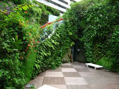 Vertical Gardens in the Urban Landscape