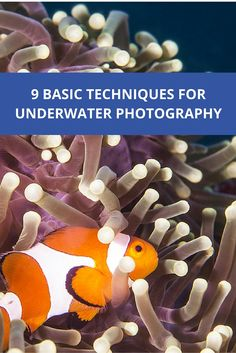 to get started with underwater photography – Getting to know the basic techniques How to get started with underwater photography – Getting to know the basic techniquesHow to get started with underwater photography – Getting to know the basic techniques Photography Guide, Underwater Photography, Getting To Know, Scuba Diving, Get Started, How To Get, Blog, Beaches, Travel