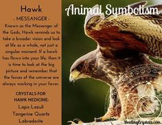 Animal Medicine: Hawk by Lizzy Baxter - Current Updates - Information About Crystals As A Healing Tool A selection of bird photos Hawk Spirit Animal, Spirit Animal Totem, Animal Spirit Guides, Animal Symbolism, Native American Wisdom, Native American Indians, American History, American Women, Animals