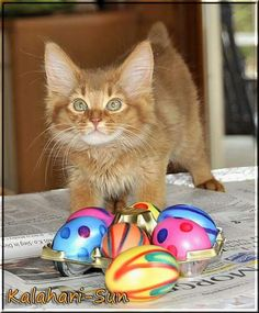 Adorable Easter