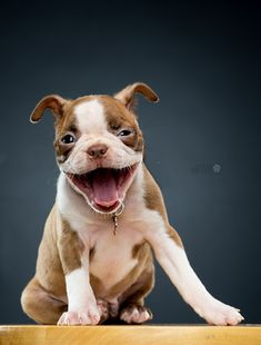 "Happy puppy -  ""Stella"" by Michael Devaney"
