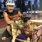 Zeus is 15-years-old, deaf and blind. His owner isn't ready to just let him die yet though. Instead he is taking Zeus on an adventure, travelling all around Australia on a bicycle with Zeus in tow on a specially made cart.