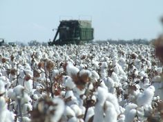 Farmer, Transportation, Number, Business, Cotton, Outdoor, Outdoors, Farmers, Store
