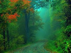 Do not go where the path may lead, go instead where there is no path and leave a trail.  Ralph Waldo Emerson