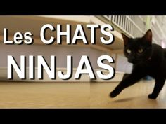 'Ninja Cats' YouTube Montage Is Most Adorably Hyper, French Thing Ever. [I <3 you, HuffPo]