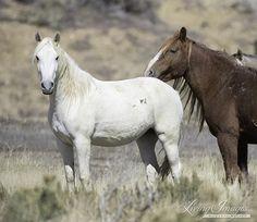 Older mare and stallion