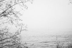 Black white photography ostfriesland germany winter christmas frost