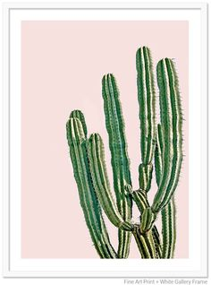 "SHOP IVA // Cactus with blush pink background. Starting at $105 framed and shipped for 21""x 28"""