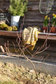 Livs Lyst: vårplukk Spring Awakening, Spring Garden, New Beginnings, 3 D, Fruit, Simple, Plants, March, Life