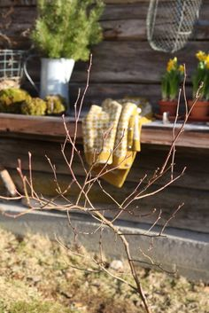 Livs Lyst: vårplukk Spring Awakening, Spring Garden, New Beginnings, Fruit, Simple, Plants, March, Life, Sun