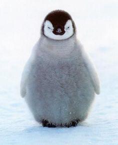 Penguin puff