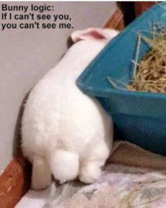 Ha! Now this. THIS is so true and one of the most adorable things to see as a bunny mummy. They are thinkers! They have the most beautiful little personalities and habits that I never tire of seeing each day.