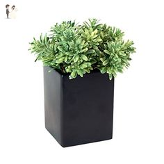 Faux Jade Grass in Black Ceramic Container Artificial Potted Bush in Green - Wedding table decor (*Amazon Partner-Link)