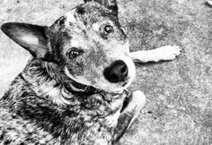 """Austin, TX Police Shoot Dog Dead after responding to wrong address: """"I just couldn't stop saying 'I can't believe you just killed my dog.' I was in a state of shock. It was all very surreal,"""" Michael Paxton told local news station KVUE. """"I told the officer with my hands in the air, """"Please don't shoot my dog. He won't bite you.""""  Paxton was playing frisbee with his dog Cisco on a Saturday afternoon when an officer walked up to his property, drew his gun, and told him to put his hands in the…"""