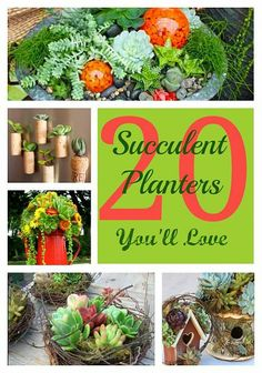 "DIY:: "" #20 Succulent Planter Projects You'll Love!"". These are all Beautiful !"