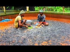 Model Catfish Hatchery / হাইব্রিড মাগুর Hybrid Magur Fish Farming - YouTube Fish Breeding, Garden Ponds, Fish Farming, Catfish, Cool Tools, Cairo, Business, Outdoor Decor, Youtube