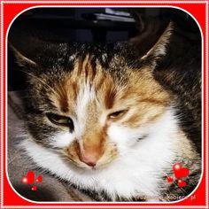 Kobiece rozmówki przy herbacie- podróże, książki, kuchnia, życie na wsi: Koty w naszym wiejskim domu Animals, Animales, Animaux, Animal, Animais