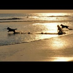 Play around in sunset