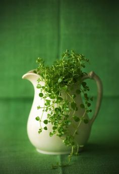 Green  ✿⊱╮