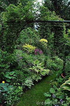Romantic garden - the large leaves of the hostas break up the monotony of all green plants.
