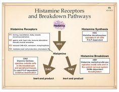 Histamine Breakdown DAO HMT DAO Diamine Oxidase: operates outside cells in the bloodstream and peripheral tissues Cu and P...