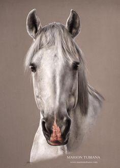 Drawing Horses Tutorial by Smirtouille Horse Drawings, Realistic Drawings, Animal Drawings, Painted Horses, Pastel Portraits, Pet Portraits, Pretty Horses, Beautiful Horses, Horse Artwork