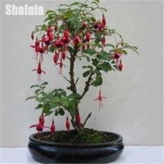 80 Pcs Exotic Mini Fuchsia Flower Seeds Beautiful Bell Flower Autumn Begonia Perennial Plants Flower Bonsai Sementes