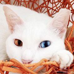 Kitty Photo From @threescaredycats