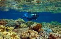 Kenalkan Potensi Bawah Laut Lewat Banyuwangi Underwater Festival