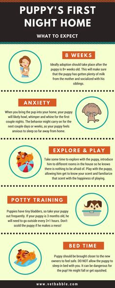 Bringing your brand new puppy home for the first time is an exciting time for pet owners, but it can be a rather frightening time for the young pup. Find out what to expect and how to prepare for it. #puppy