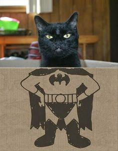 #gato #mascotas #animales En @TiendAnimal La Tienda Online para Mascotas nos gusta mucho esta foto. www.tiendanimal.com
