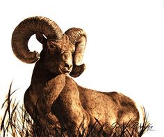 """The Guardian (bighorn ram) by julie bender Pyrography ~ 16"""" x 19"""""""