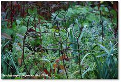 Le jardin, c'est tout !: Jardinage et créativité
