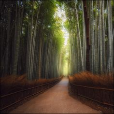 Bamboo forest by Pavel Minaev on 500px