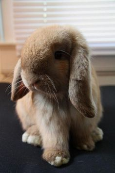 Pretty rabbit #rabbit