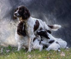 """""""Time to say goodbye"""" be Alan Mattison , what a superb pic"""